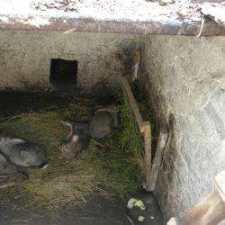 Кролики в ямі