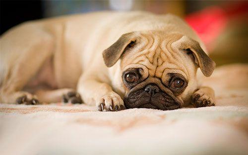 гастроентерит у собаки