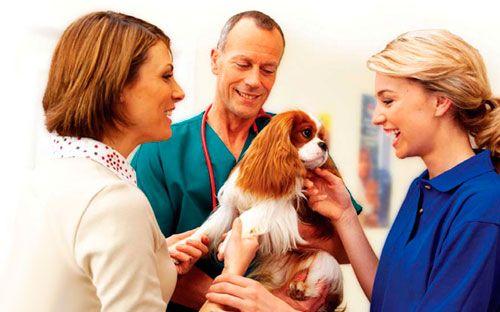 лікування гастроентериту у собаки