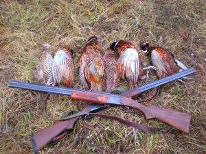 Особливості полювання на фазанів в зимовий час