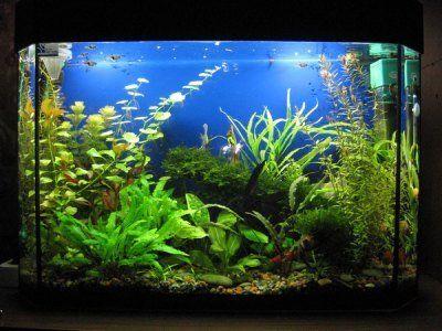 Особливості підготовки води в новому акваріумі