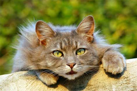 Особливості поведінки кішок.