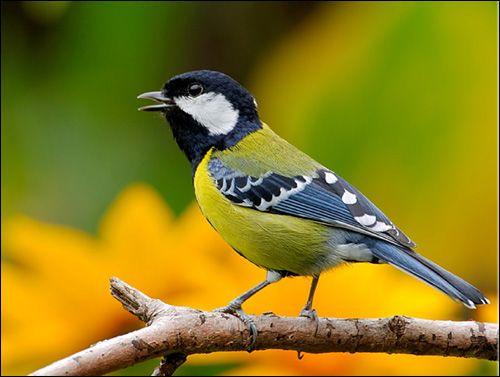Особливості утримання та розведення ткачикових птахів