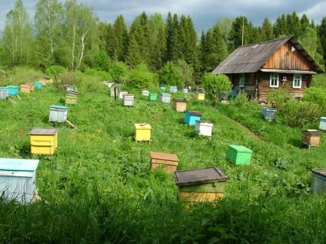 Особливості уральського бджільництва