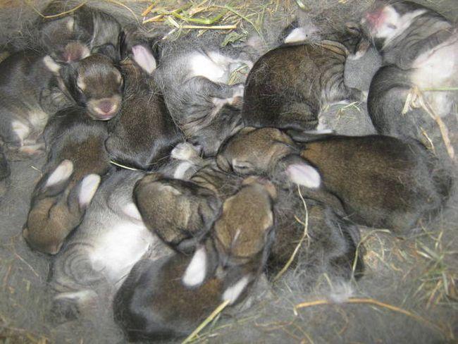 Особливості вирощування кроликів в зимовий період