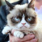 Похмурий кіт в руці