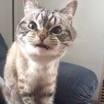 Кішка-вампір на кріслі