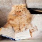 Кот ГАРФ читає книгу
