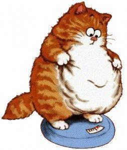 Зайва вага у кішок