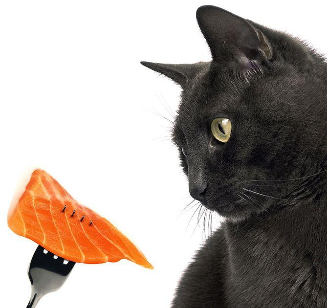 Зайва вага у кішки: причини, наслідки, профілактика