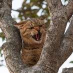 Падение кошек с высоты.