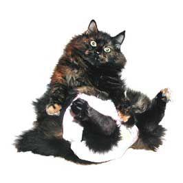 Памперси для кішки