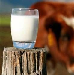 Парне молоко - користь і шкода. Чим корисно парне молоко? Чому не можна пити парне молоко?)