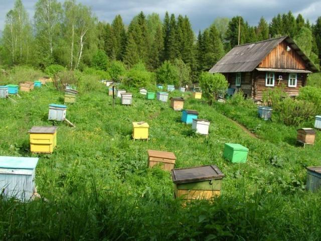 Пасіки башкирії або все про розвиток столиці вітчизняного бджільництва
