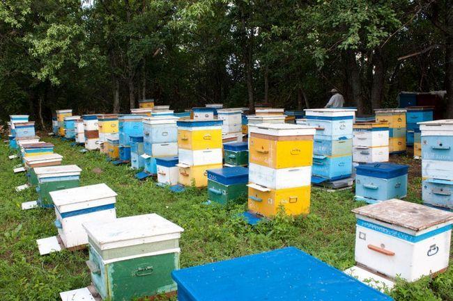 Пасіки харкова - гордість слобожанського бджільництва