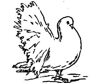 Павичі (голуби)