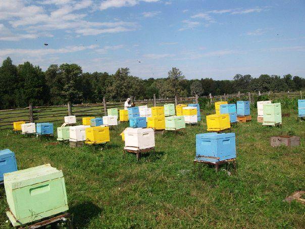 Бджільництво білорусії - пасіки з многлетнім досвідом