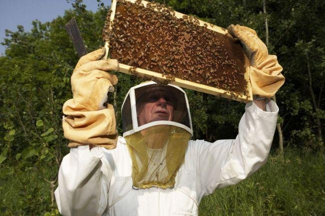 Бджільництво за законом: розглядаємо його положення