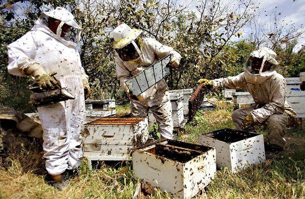 Бджільництво в світі або як живеться бджолам за кордоном