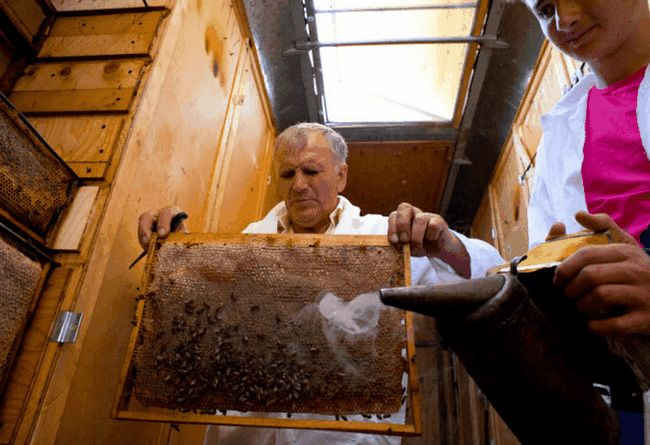 Бджільництво в павільйонах: всі тонкощі процесу