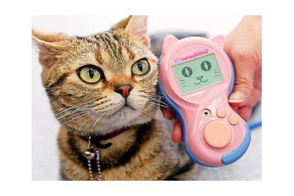Перекладач з котячого