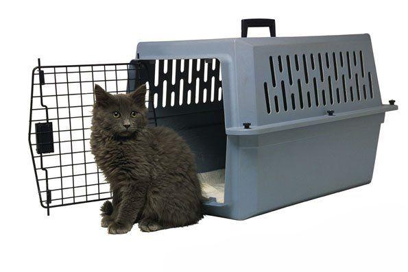 Перевезення кішок в контейнері