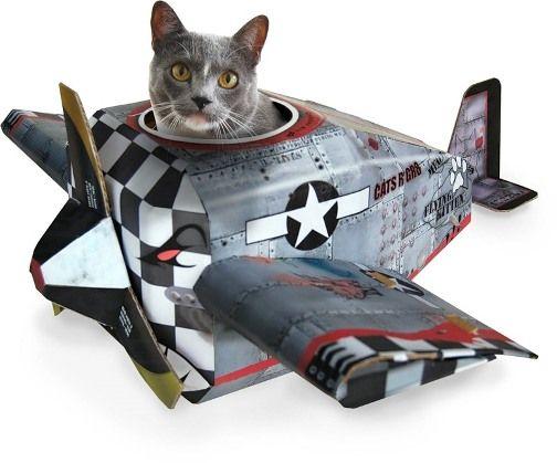 Перевезення кішок в літаку