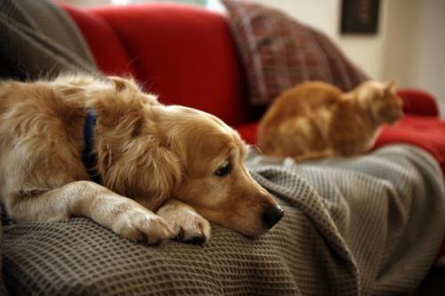 як позбутися лупи собаки
