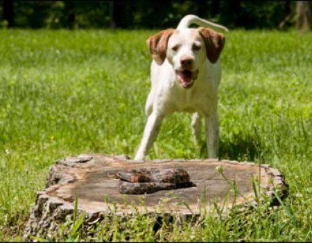Перша ветеринарна допомога собаці