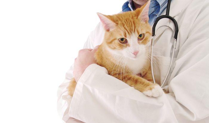 Перший візит до ветеринара