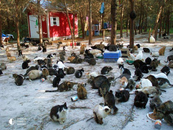 Картинки по запиту притулки для кішок