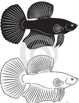 Петушок рибка
