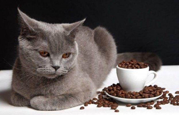 Харчування кошенят 8 місяців