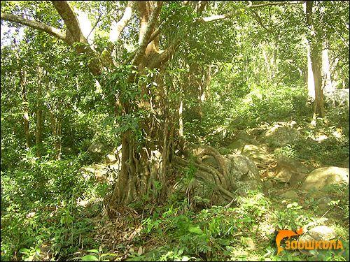Субтропічні лісові і жестколестние формації євразії