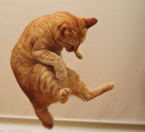 Хвост как руль, помогает делать прыжки в нужную сторону