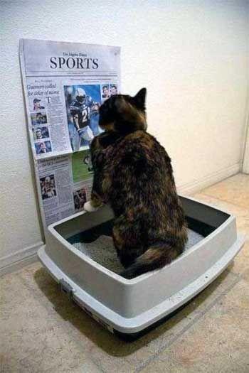 Чому кішка не ходить в лоток?