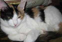 Чому кішка постійно спить?