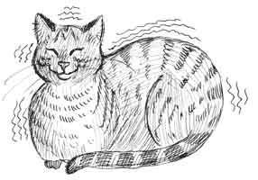 Чому гурчать кішки