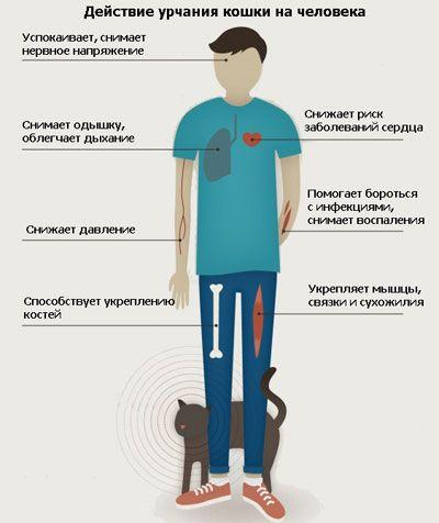 Як бурчання кішки діє на людей