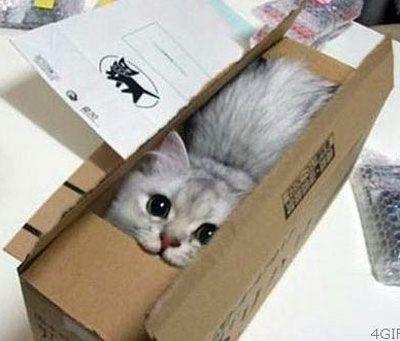 Кішка в коробці фото