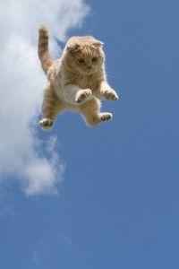 Чому кішки приземляються на лапи?