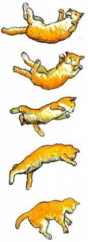 Кішки приземляються на лапи