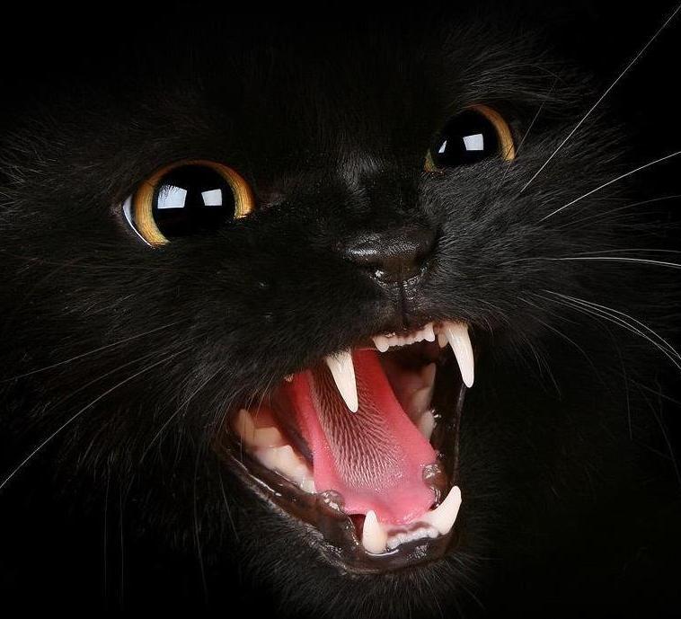 кішка шипить
