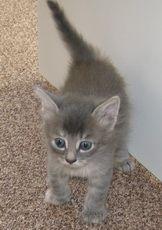 Чому кішки труться об ноги і меблі?