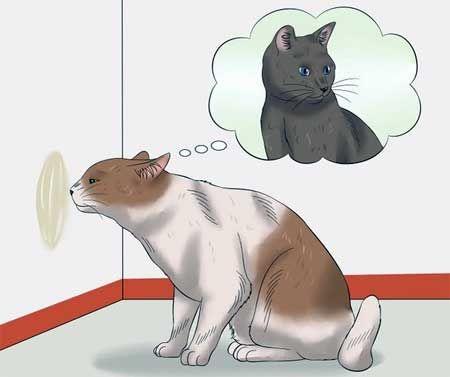 Кот мітить територію