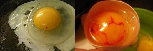 Кров на жовтку курячого яйця