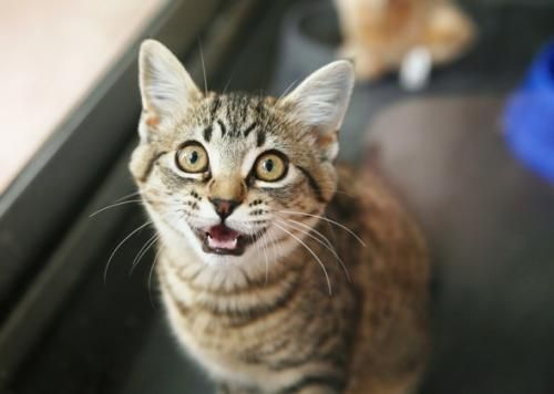 Чому не можна дивитися кішці в очі?