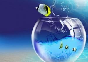 Чому рибки вистрибують з акваріума