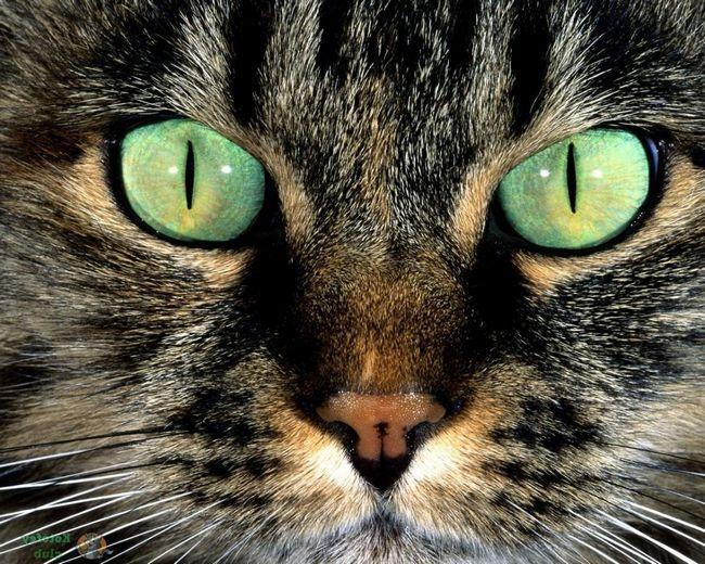 Котячий погляд.