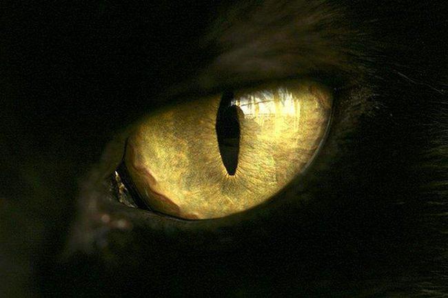 У чому особливість котячого зору.